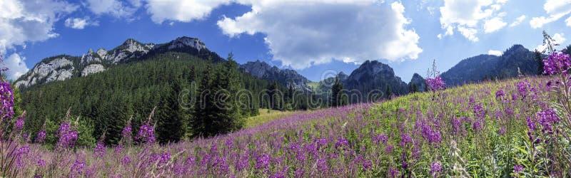 从谷的山全景 免版税库存图片
