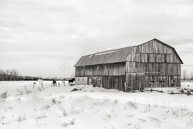 谷仓,黑白的魁北克- 免版税图库摄影