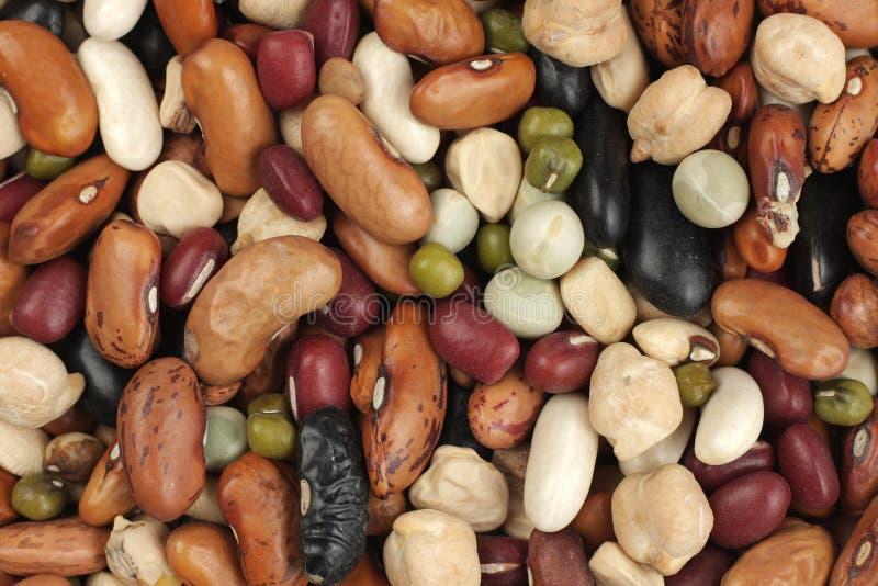 豆另外亲切的混合物 库存图片
