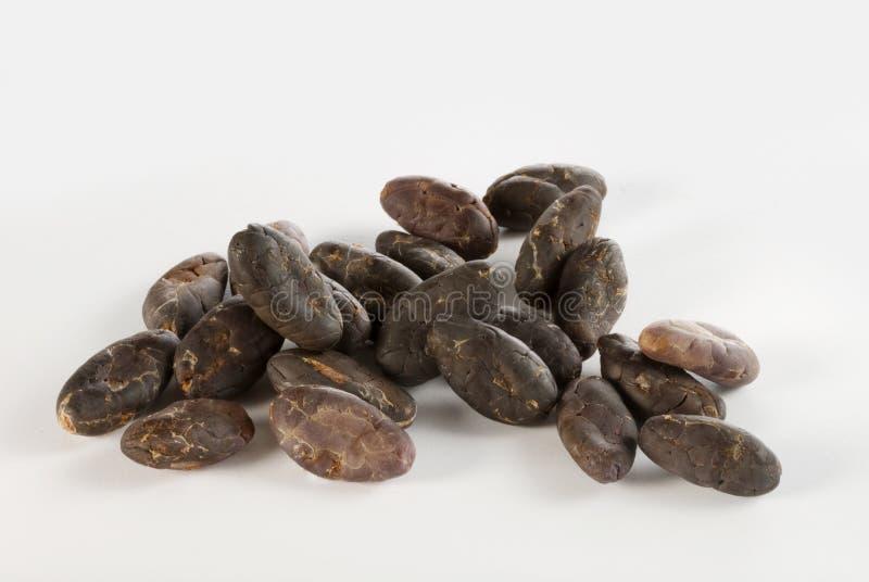 豆可可粉 免版税图库摄影