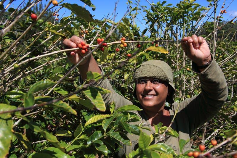 豆咖啡日挑选微笑的晴朗的妇女 图库摄影