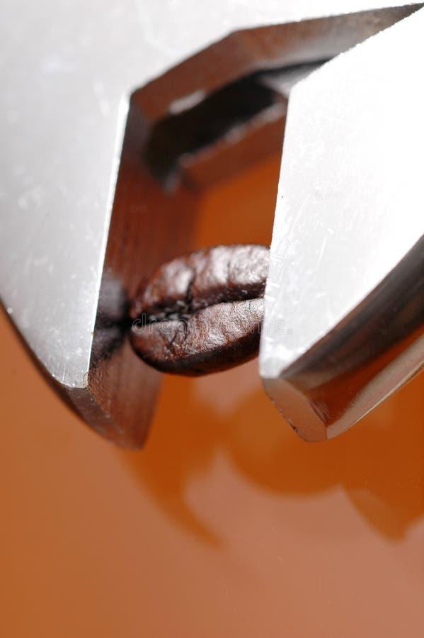 豆咖啡板钳 免版税图库摄影