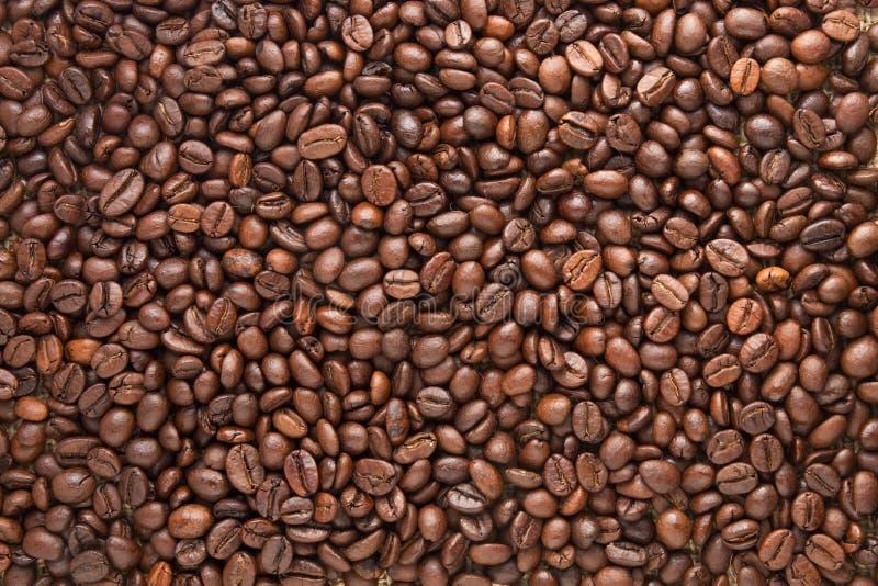 豆咖啡模式 库存图片