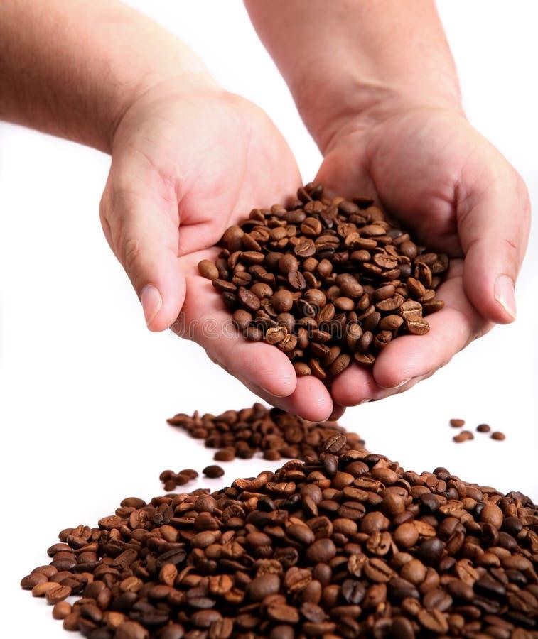 豆咖啡递藏品 图库摄影