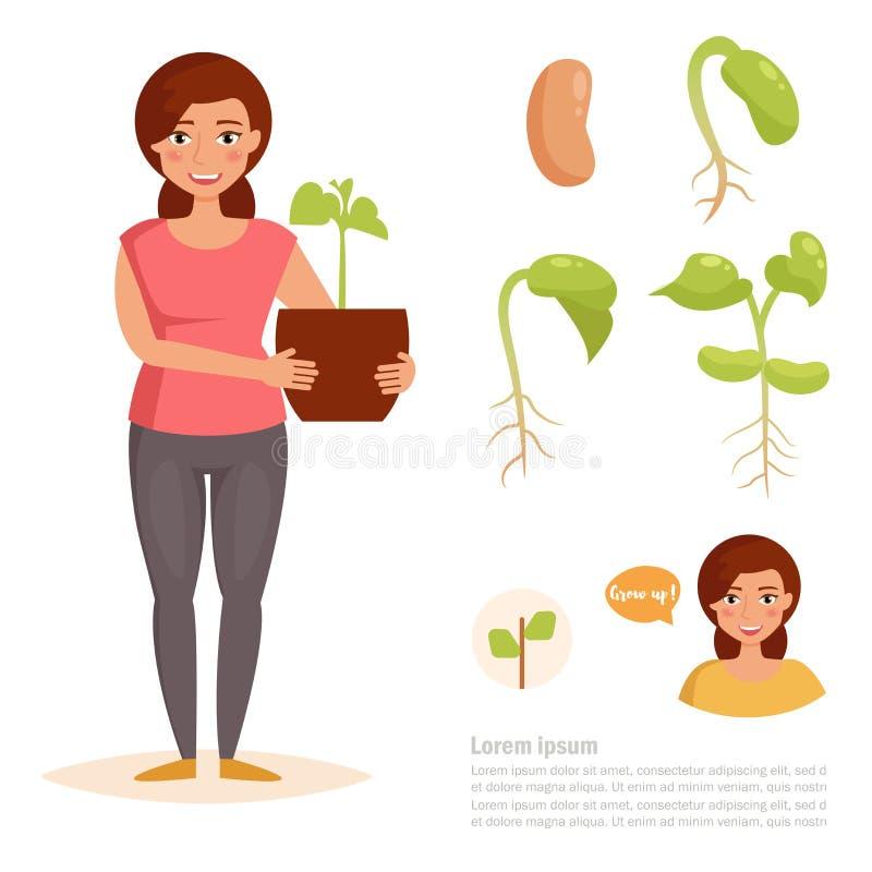 豆成长阶段  向量例证