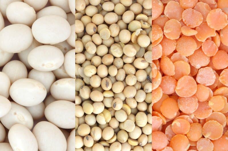 豆扁豆红色大豆白色 免版税库存照片