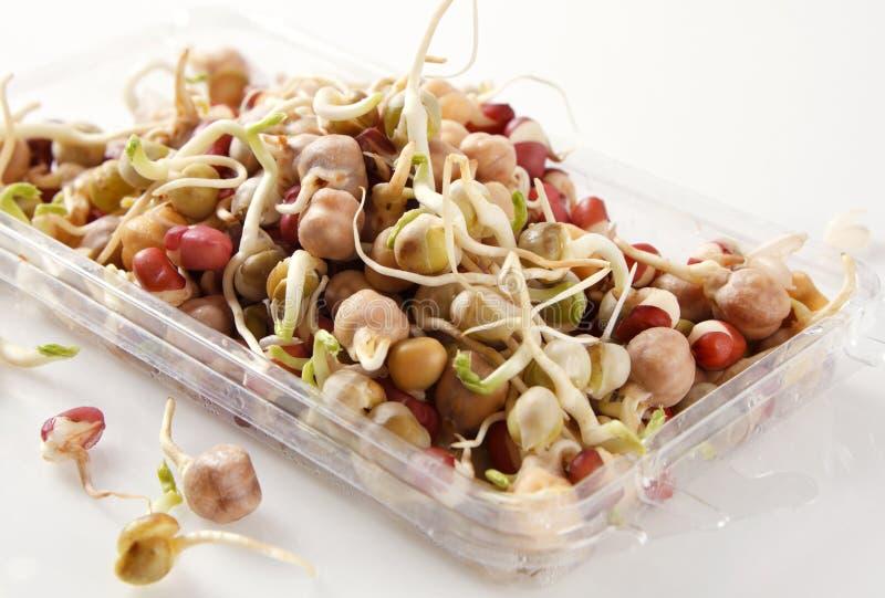 豆混杂的新芽 免版税库存照片