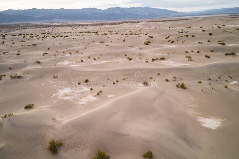 豆科灌木平的沙丘在死亡谷 免版税库存图片