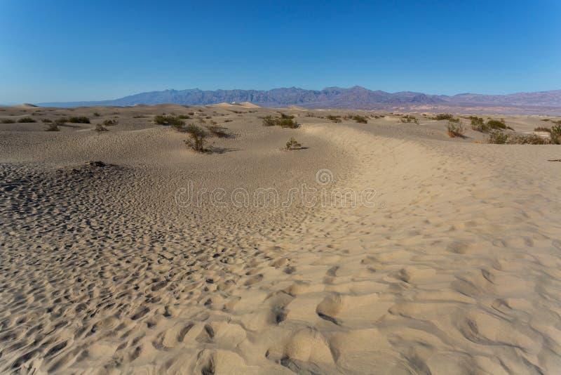 豆科灌木平的沙丘在死亡谷 库存图片