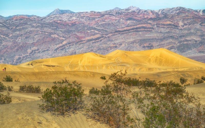 豆科灌木平的沙丘 死亡谷国家公园,加利福尼亚 免版税库存照片