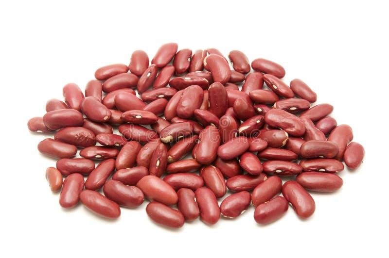 豆肾脏 免版税库存照片