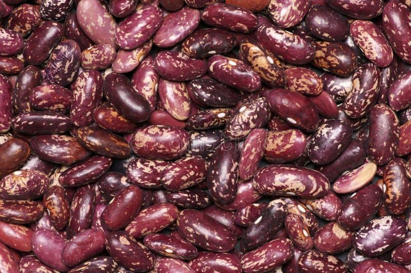 豆被玷污的肾脏红色 免版税库存图片