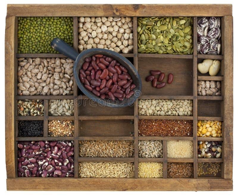 豆谷物肾脏瓢植入种类 免版税库存照片