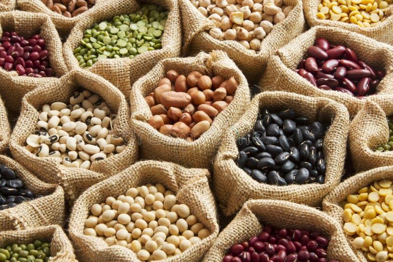 豆类 免版税库存图片