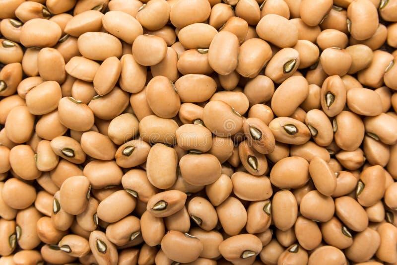 豇豆豆类 五谷特写镜头,背景用途 库存图片
