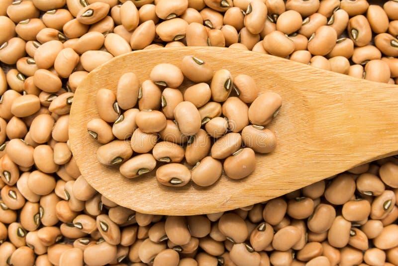豇豆豆类 在木匙子的五谷 关闭 图库摄影