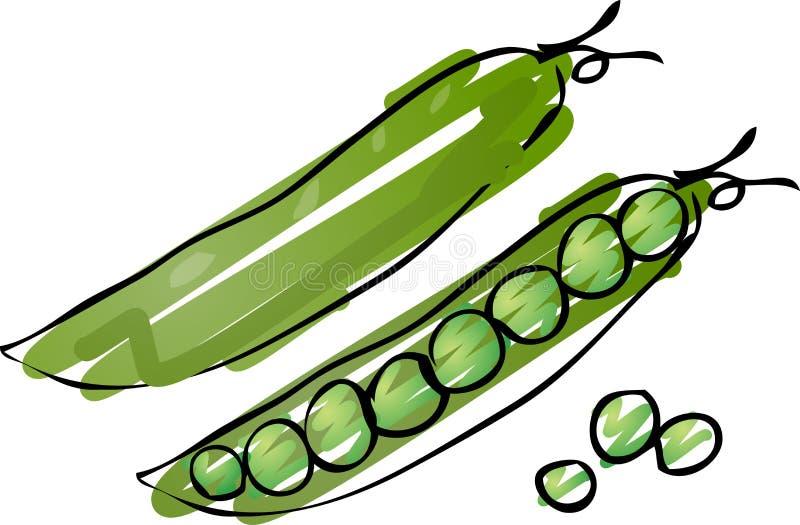 豌豆草图 向量例证