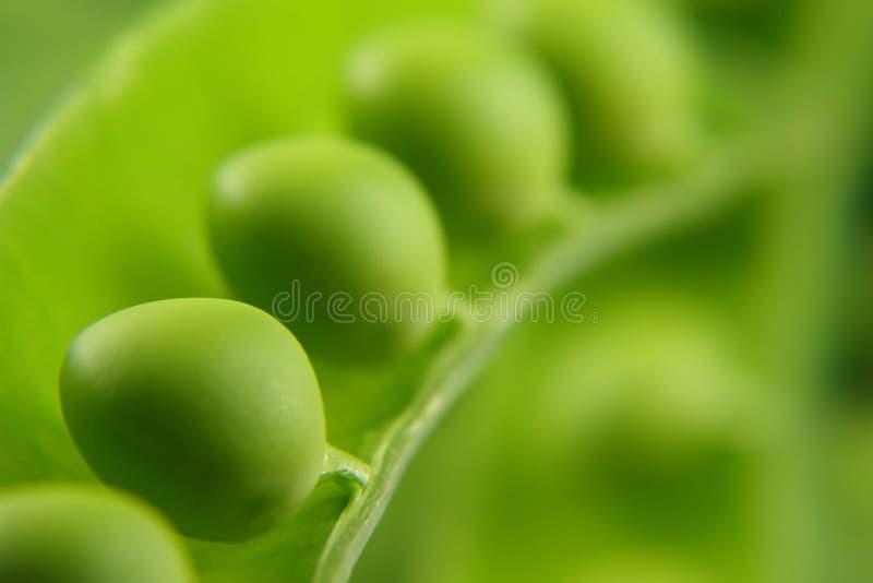 豌豆豌豆荚 免版税库存图片