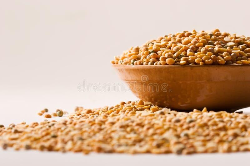豌豆黄色 免版税库存照片