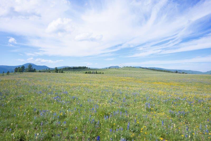 豚脊丘的草甸 免版税库存图片