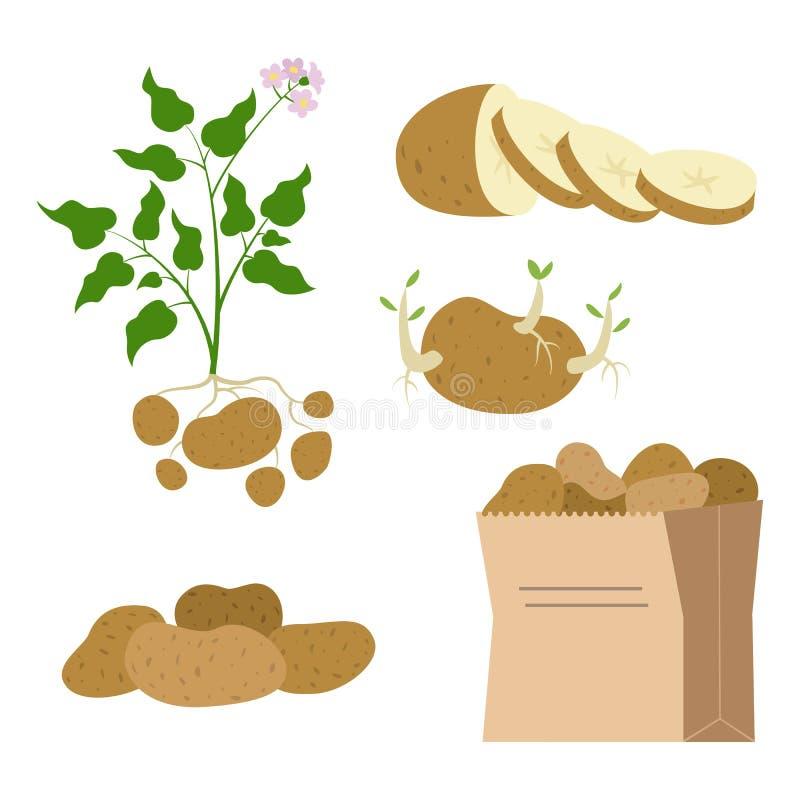 象套在白色背景的土豆 向量例证
