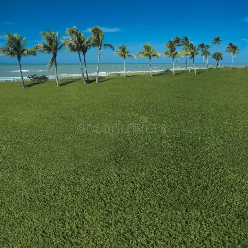 象草的海景 库存照片