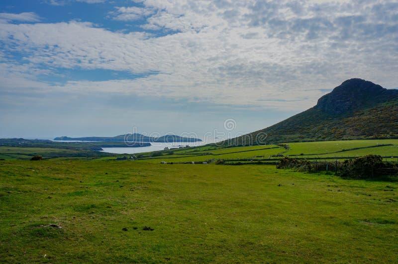 象草的领域和蓝色海看法  免版税库存图片