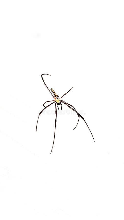 象蜘蛛 库存图片