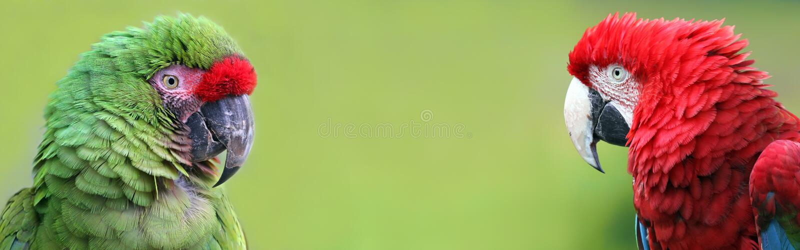 画象观点的与拷贝空间的金刚鹦鹉 图库摄影