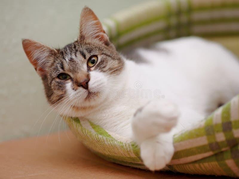 画象镶边与白色猫 免版税库存图片