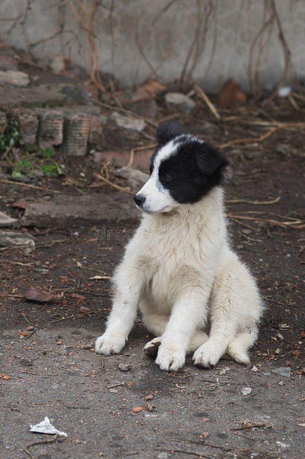 象离群小狗的玩具熊 库存图片