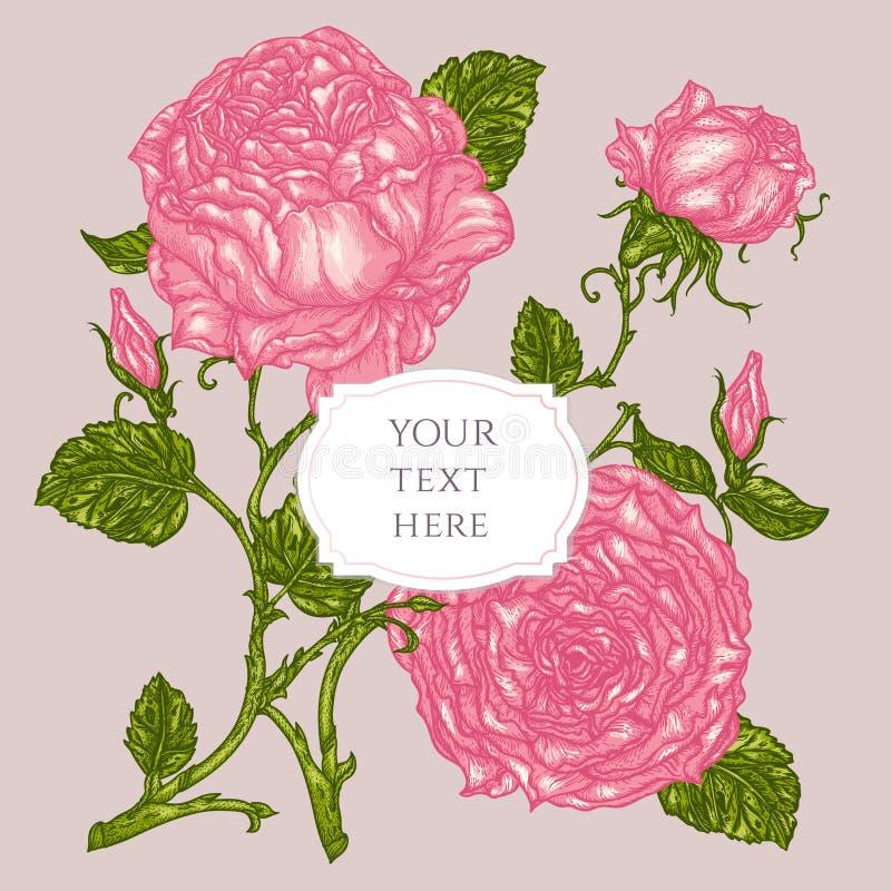 豪华桃红色玫瑰花和叶子贺卡与纸 库存例证