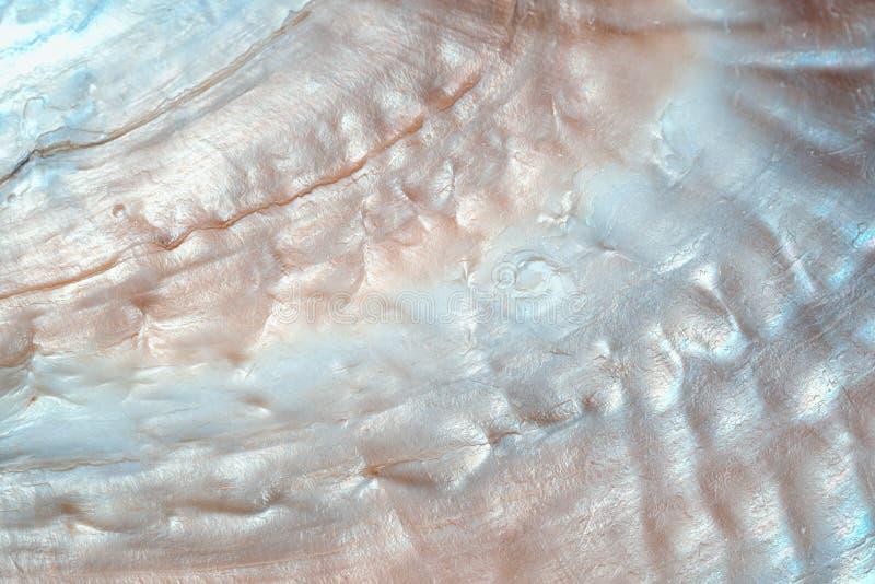 豪华珍珠层贝壳背景纹理 免版税库存照片