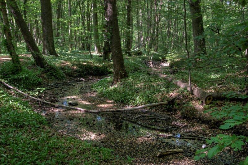豪华的森林 免费库存照片