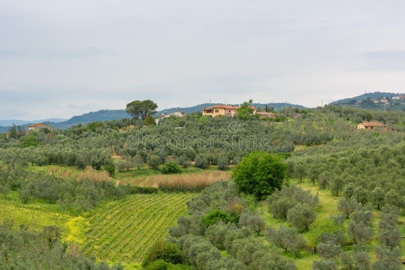 豪华的植被包围的传统葡萄园包括绵延山 免版税库存图片