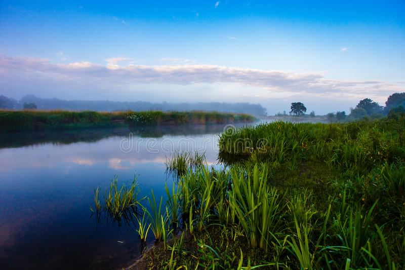 豪华的植被包围的有雾的河 在日出的蓝天 库存照片