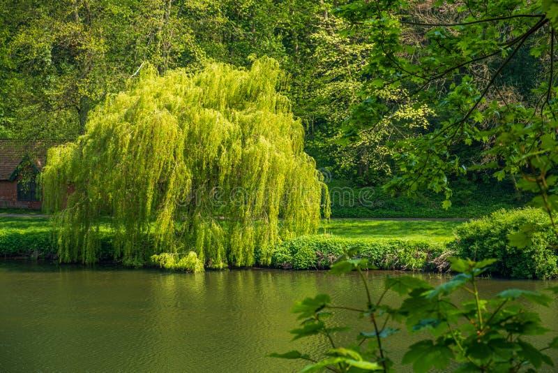 豪华的植被和威尔河在达翰姆,英国 图库摄影