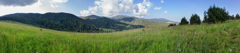 豪华的植被美好的夏天全景在阿尔泰山的 免版税库存图片