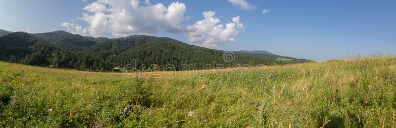 豪华的植被美好的夏天全景在阿尔泰山的 免版税图库摄影