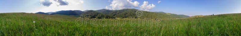豪华的植被美好的夏天全景在阿尔泰山的 免版税库存照片