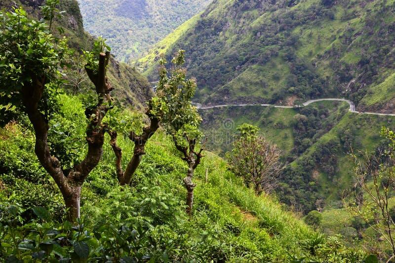 豪华的绿草和弯曲的山路 免版税图库摄影