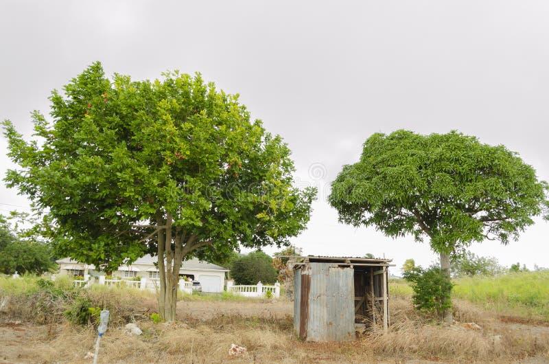 豪华的西非荔枝果和芒果树 库存照片