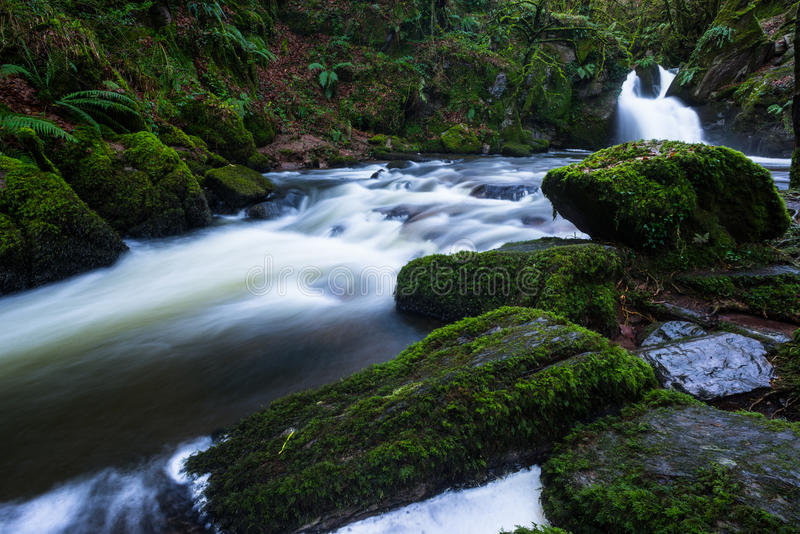 豪华的绿色森林瀑布 图库摄影