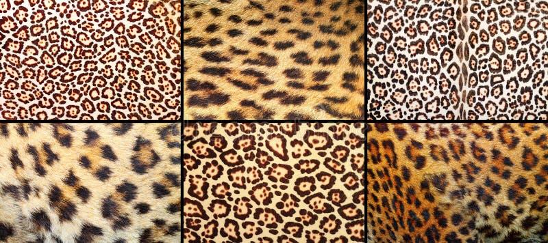 豹子兽皮纹理的汇集 库存图片