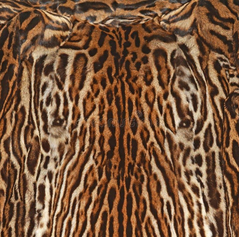 豹子毛皮纹理背景 免版税库存照片