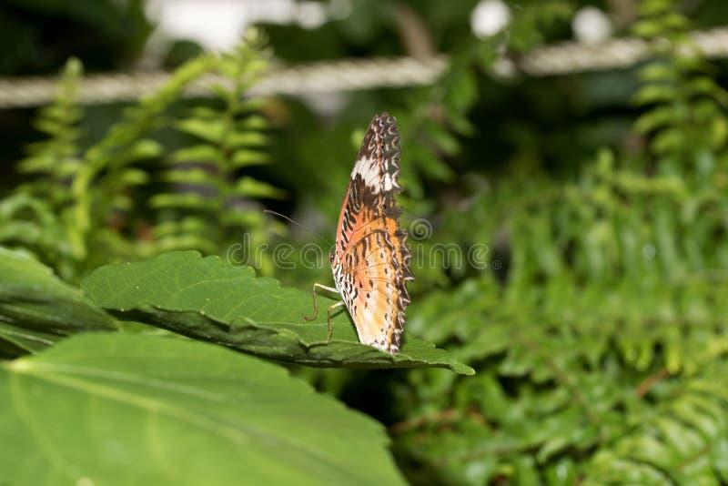 豹子网的后面看法在关闭蹒跚而行与闭合的翼坐一片绿色叶子 库存照片