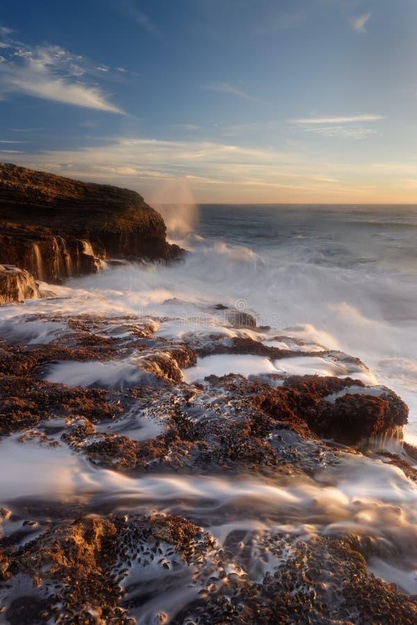 豹海滩 免版税库存照片