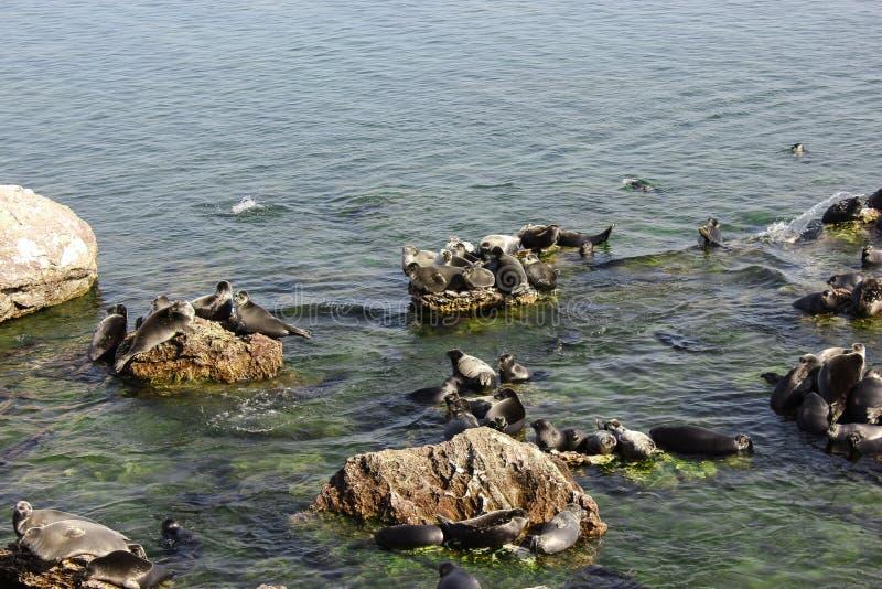 贝加尔湖封印在Ushkan海岛上的岩石说谎 库存图片