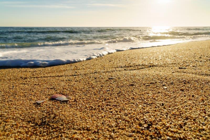 贝壳和波浪在海滩在葡萄牙日落的 免版税库存图片