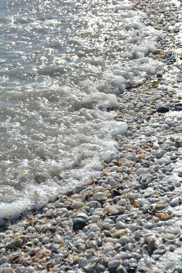 贝壳和海洋佛罗里达海滩的 库存图片